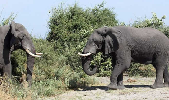 Photo of Dutch and Belgian tourists taking pictures trampled by elephant in Zambia