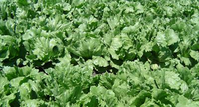 Photo of Bomb hidden in vegetables kills at least 20 in Pakistan