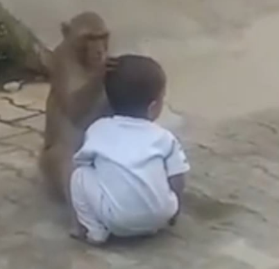Monkey kidnaps 2-year-old boy from his home in India (photos/video)