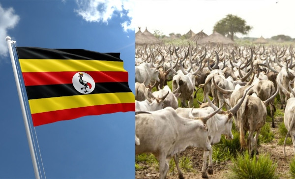 Photo of Uganda to issue birth certificates to cows