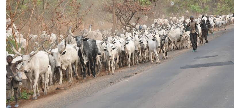 Delta community bans sale and consumption of beef