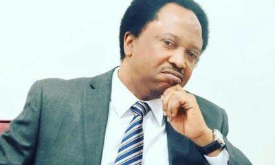 Shehu Sani tells Buhari to test Madagascar's COVID Organic