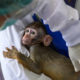 Thailand begins COVID-19 vaccine trials on monkeys